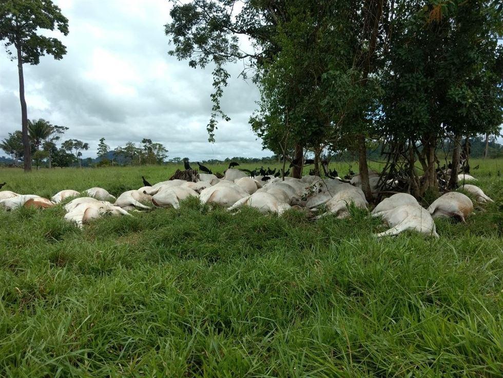 raio mata bovinos em Rondônia