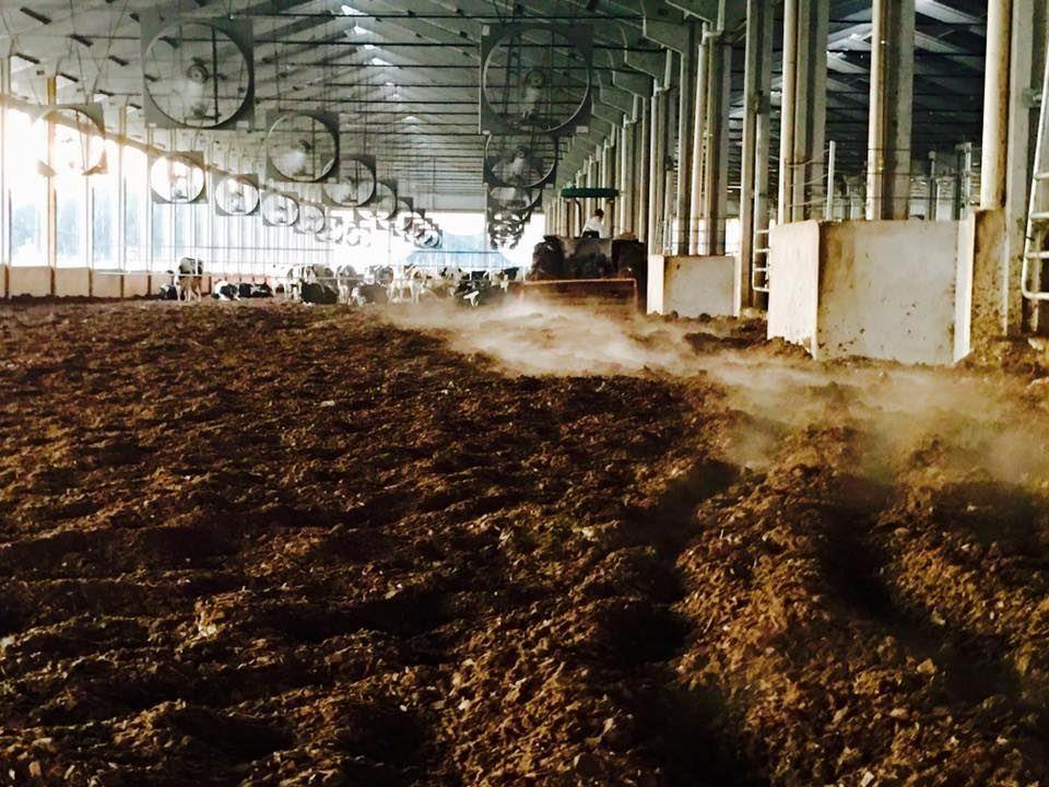 compost barn presente entre os 100 maiores produtores de leite do Brasil