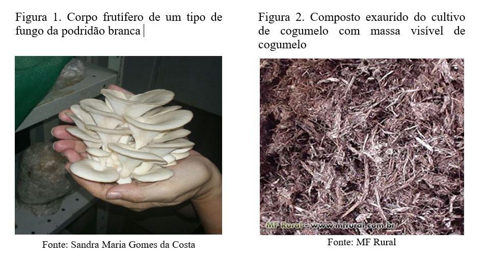 fungo branco ligninina nutrição ruminantes