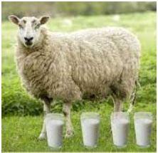 Leite de ovelha