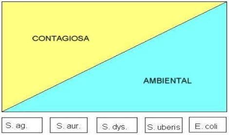 Escala comparativa de classificação entre agentes causadores de mastite contagiosa e ambiental.