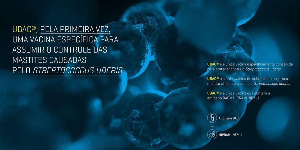 Assuma o controle do Streptococcus uberis